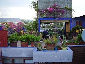 mexico city rooftop garden